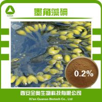 墨角藻提取物 墨角藻多糖 现货供应 墨角藻碘 0.2% 墨角藻粉