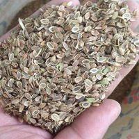 求购防风种子 防风种子种苗春季大量批发回收
