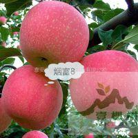 壹棵树农业 苹果树苗培育中心 苹果树苗哪里有卖 成活率高