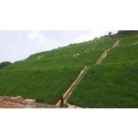 铜仁边坡绿化施工可以冬天播种的草种草籽有哪些品种