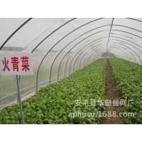 【现货供应】蔬菜防虫网、尼龙防虫网、农业种植防虫网、防虫网