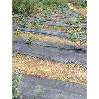 果园防草布、地布固定专用地钉(16cm、21cm')价格多少钱一根