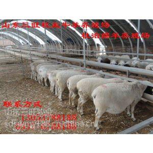 供应春季是养羊的季节--山东三旺牧业牛羊养殖场