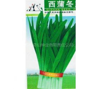 供应西蒲冬韭菜种子