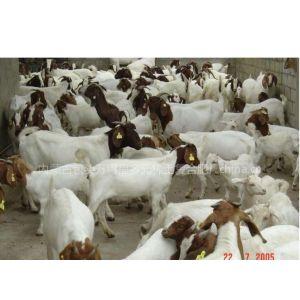 猪饲料稀土营养调节剂