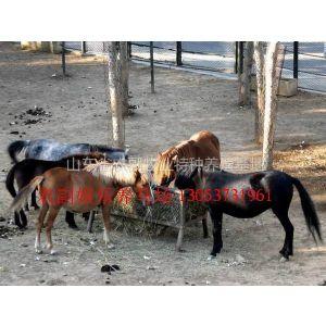 供应养马,养马介绍,养马计划,马的品种,宠物马,袖珍马,迷你马,矮马,跑马,骑乘马,半血马,马的养殖