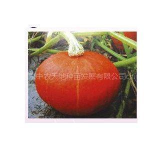 供应台湾红升南瓜种子