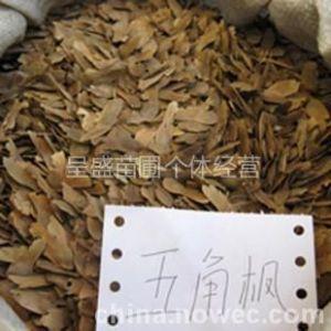供应供应手选白皮松种子油松种子华山松种子五角枫种子优惠价格