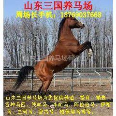 供应养一匹马一年需要多少费用,一匹马一天吃多少草料