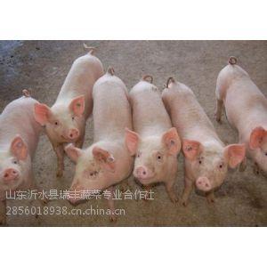 供应山东省仔猪价格-农副产品综合公益报价