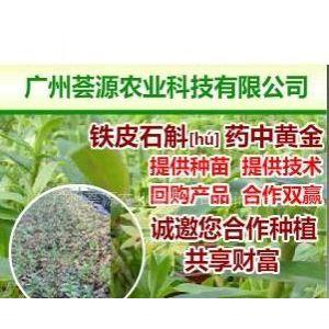供应XG广州荟源农业科技有限公司金秋时节话石斛四大名兰之一