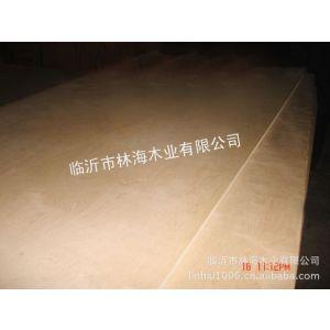 常年供应大量桦木胶合板