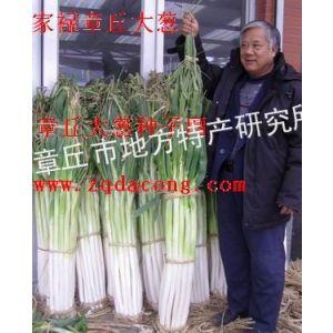 供应章丘大葱种子 大葱价格 大葱种植技术 2012年大葱价格 大葱病虫害防治 怎样种葱 如何种葱 大葱种
