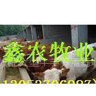 供应山东肉牛养殖场波尔山羊养殖场肉驴养殖场