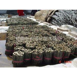 供应新疆杨插条9.6米车可装9.5万株  13919844299