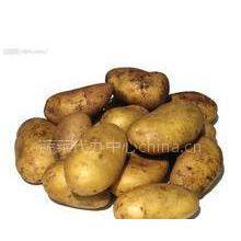 供应锦州供应荷兰土豆