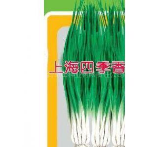 供应上海四季香葱种子