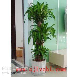 供应北京室内绿植租摆公司