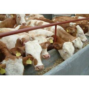供应波尔山羊价格/山东三旺牧业养殖场