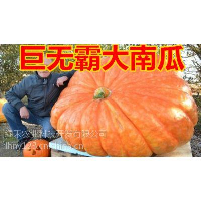 供应美国巨型大南瓜种子