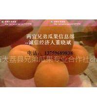 供应陕西金太阳杏,金太阳杏价格,陕西金太阳杏价格,陕西金太阳杏基地
