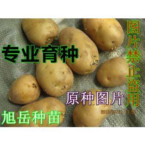 供应脱毒马铃薯(2014秋冬季用土豆种子)