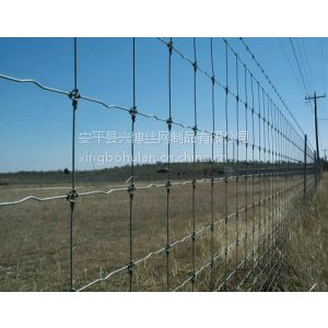 供应兴博牛栏网、草原网、草原养殖围栏网