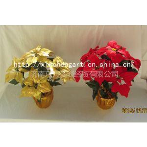 供应济南金色圣诞花批发、金色一品红盆景