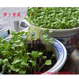 萝卜芽菜种子,无公害蔬菜,老少皆宜的高档蔬菜