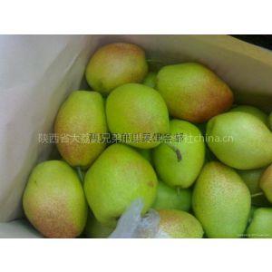 供应陕西红香酥梨价格,红香酥梨产地批发,红香酥梨基地
