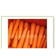 供应胡萝卜