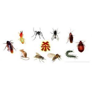 供应东莞长安杀臭虫 长安杀臭虫公司专业白蚁防治杀虫灭鼠等虫害消杀