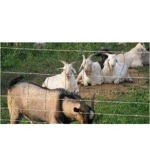 供应养殖防护网!养殖防护网规格#养殖防护网批发