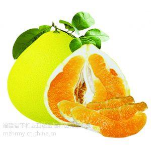 黄肉蜜柚苗低价供应,黄肉柚子苗|金桔蜜柚苗,正达