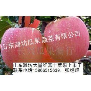 供应山东红富士苹果种植基地