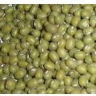 内蒙绿豆|内蒙古绿豆|绿豆QQ465376652