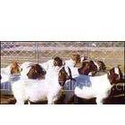 供应天津有没有专门供应小羊羔的市场