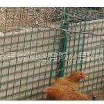 供应养鸡铁丝网,散养鸡围栏网,养鸡围网,养鸡专用网。