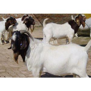 供应波尔山羊价格