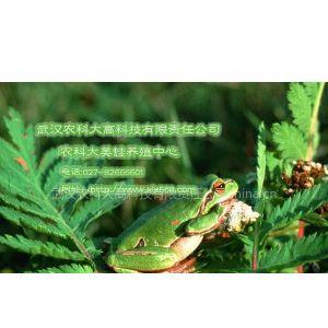 供应武汉农科大教您如何识别美国青蛙和牛蛙
