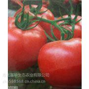 供应抗ty病毒粉果番茄种子-欧盾