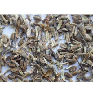供应新产白术种子3000公斤,白术种苗10吨,优质改良品种