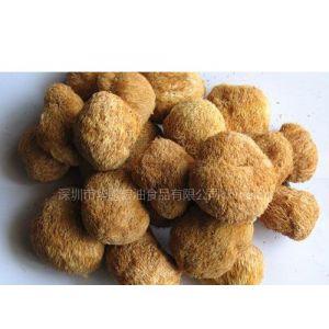 供应福建猴头菇