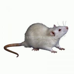 供应东莞白蚁防治除四害消毒杀虫灭蟑螂老鼠、蚊子