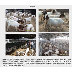供应养羊|农村养殖业什么***赚钱|肉羊养殖|肉羊繁育基地
