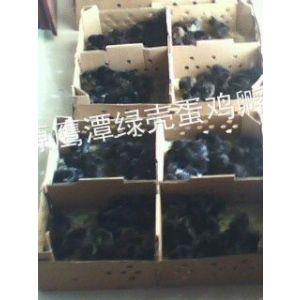 供应出售江西 安徽 福建 浙江 上海 江苏 四川 贵州 贵阳 云南 西藏 新疆绿壳蛋鸡苗