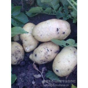 供应讷河脱毒马铃薯种子原1原2