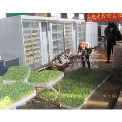 北京上海广州福建南昌武汉长沙南宁贵阳青州市庆华绿色无公害豆芽机、花生芽机
