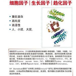 """美国MPBIO公司提供重组蛋白、高纯度、高活性及低内毒素的""""细胞因子""""---北京毕特博"""