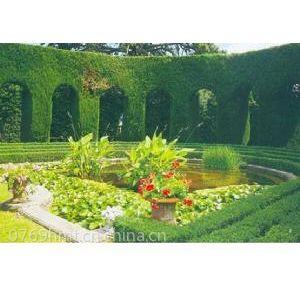 供应东莞墙面绿化植物 别墅绿化维护 豪华别墅